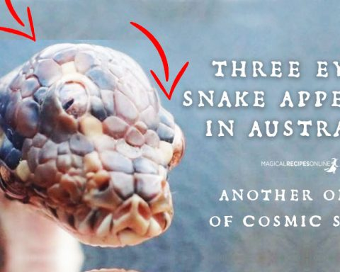 Three Eyed Snake Found - An omen of Cosmic Shift