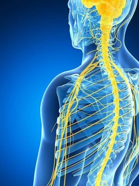 Die Spinalnerven sind die zentralen Verteiler des Nervensystems. Kommt es an diesen Stellen zu Reizungen oder Schädigungen führt dies zu neurologischen Ausfallerscheinungen an Körperstellen.