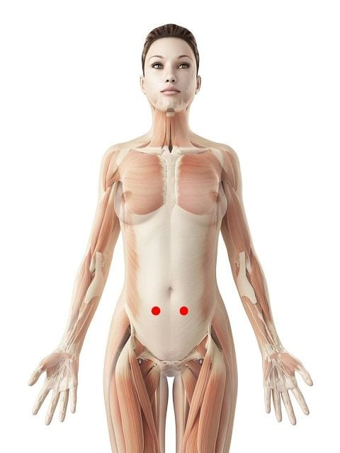 Triggerpunkte in der geraden Bauchmuskulatur verursacht bandförmige Schmerzen im Bauch und Rücken sowie Einschränkungen beim nach hinten lehnen (Rückbeuge)