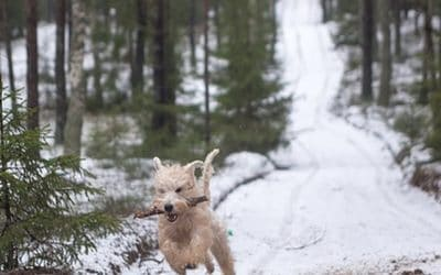 7 Cold Weather Pet Safety Tips for the New Year