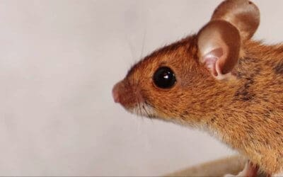 7 Places to Check for Signs of Mice Before You Buy