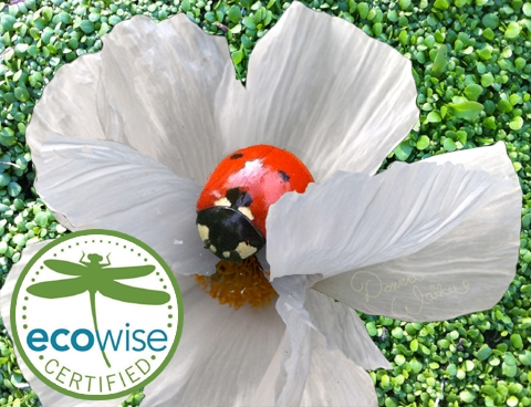 Hearts' service professionals are EcoWise Certified in organics. We care about beneficial insects like this Seven-spotted ladybug!