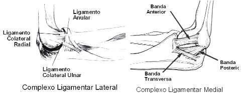 Complexo ligamentar do cotovelo