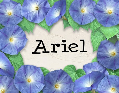 Morning Glory Kids Names Art Blue by Mickie Caspi