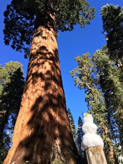 snowman sequoia