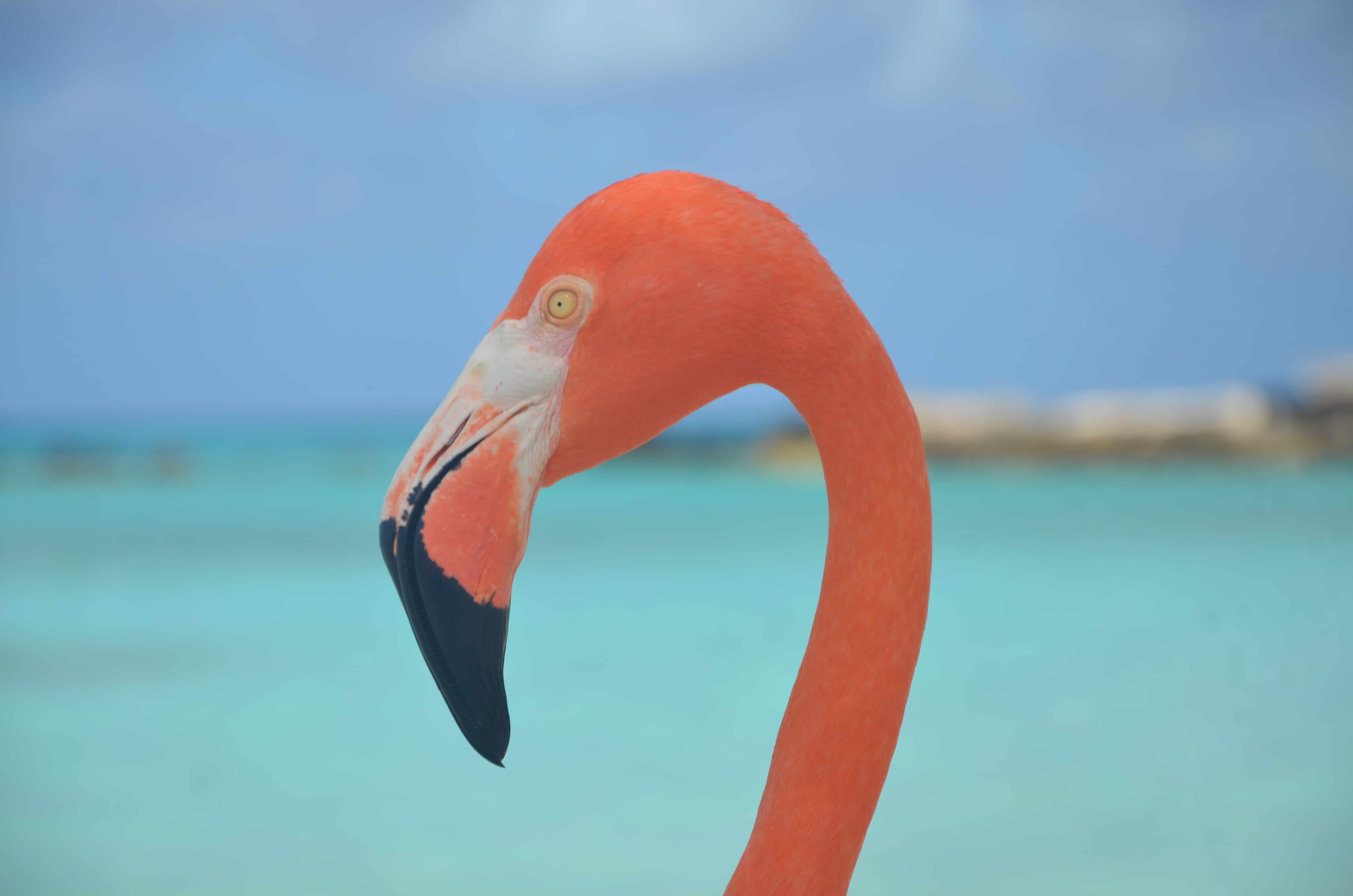 Playa flamingo Aruba como llegar