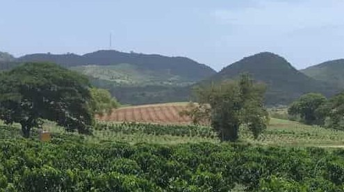 Farms and Hills of Puerto Rico