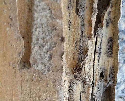 Ventana con plaga termitas