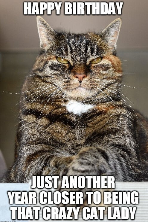 crazy cat lady birthday meme