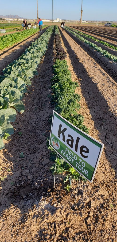 "As seen at Field to Feast Yuma: Row of greens growing in dirt field. Sign on field row says ""Kale."""