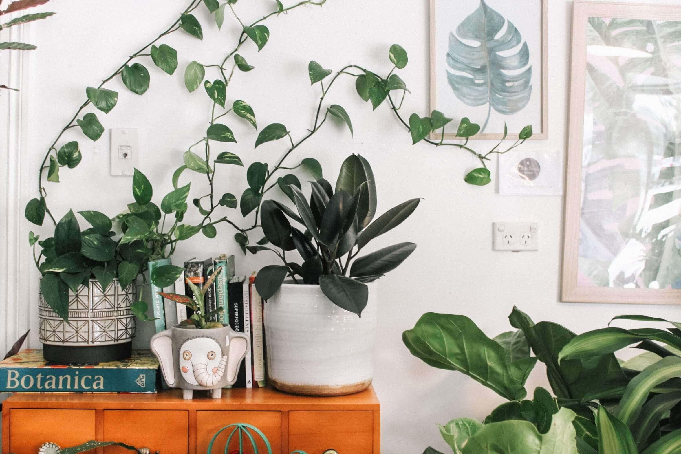 Les plantes décorent plus que nos intérieurs