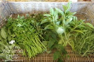 Basket of Herbs