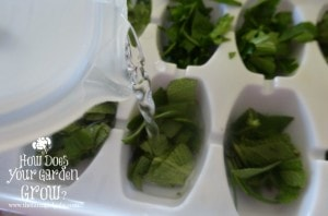 Freezing Herbs in Water