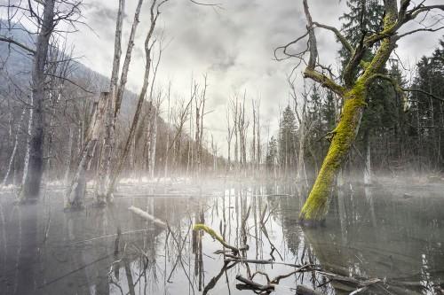 Der Sumpf: Wie Du mit Scham umgehst