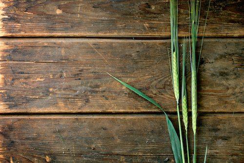 home brew grains - barley