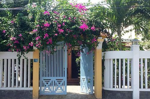 Bougainvillea Covering Gate