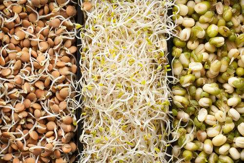 Protein Rich Veg Food - Sprouted Seeds