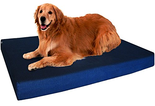 Best Indestructible Dog Beds: Is There Really a