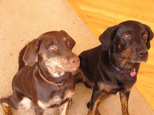Tora and Maia