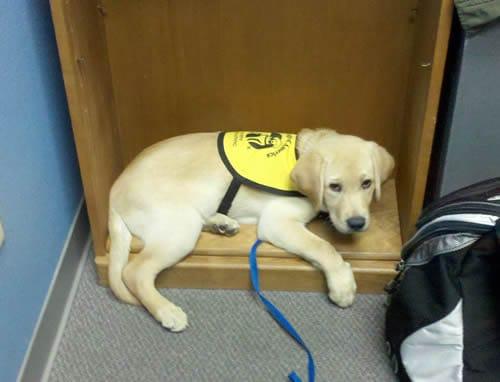Dublin A Puppy In Training