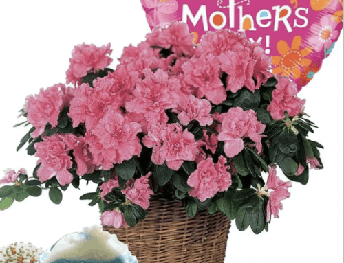 Unique Ideas to Make This Mother's Day Still Special