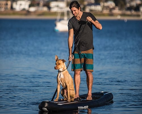 Inflatable paddle boards are durable enough for dogs.