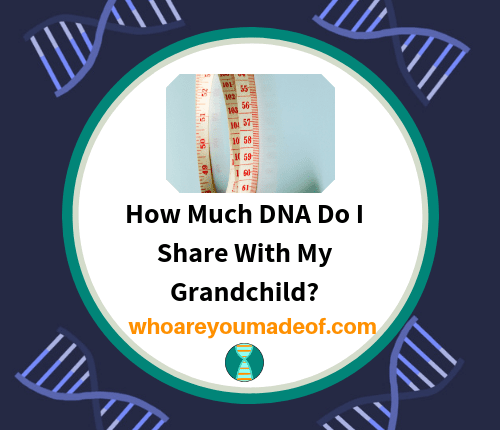 How Much DNA Do I Share With My Grandchild_