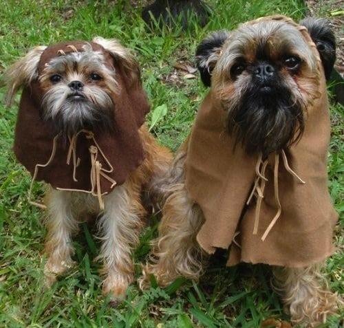 Ewoks Dog Halloween Costumes