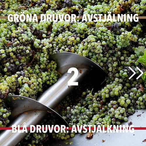 Vintillverkning guide hungry wines: Avstjälkning