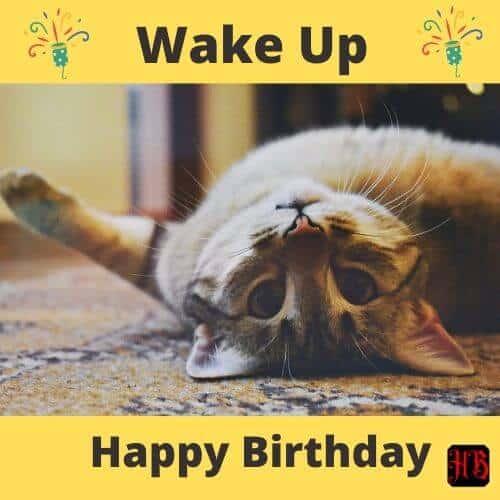 Birthday wish for cat lover