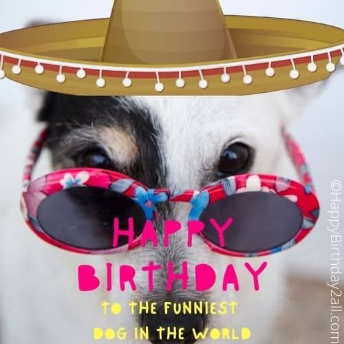 happy birthday wishes for dog