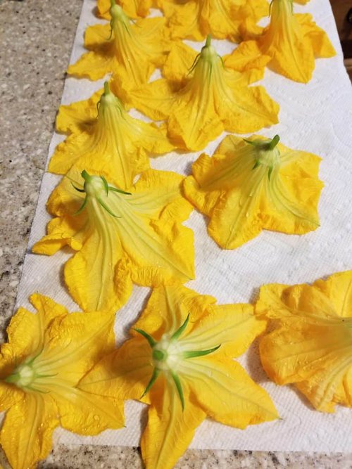 Fried squash blossoms, Using your garden produce, preparing squash blossoms to fry