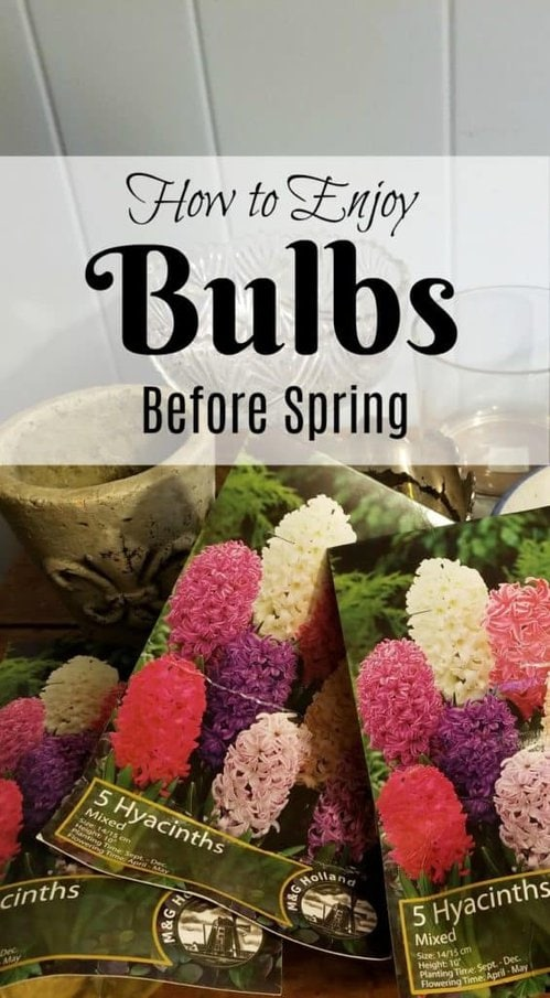 Enjoying Bulbs in winter