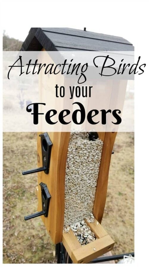 Attracting a variety of birds to your feeders, Bird feeder filled with safflower seed