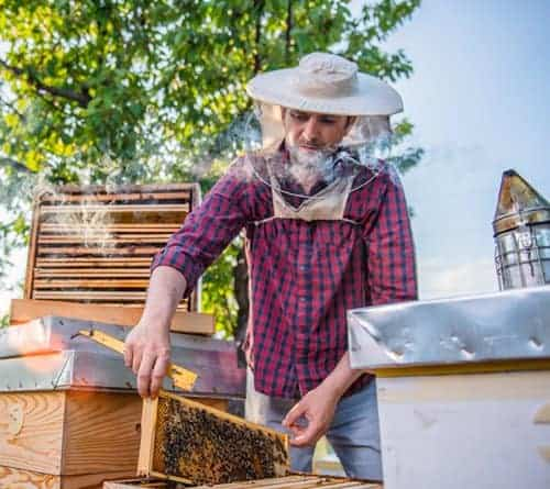 starting a beekeeping business is hard work