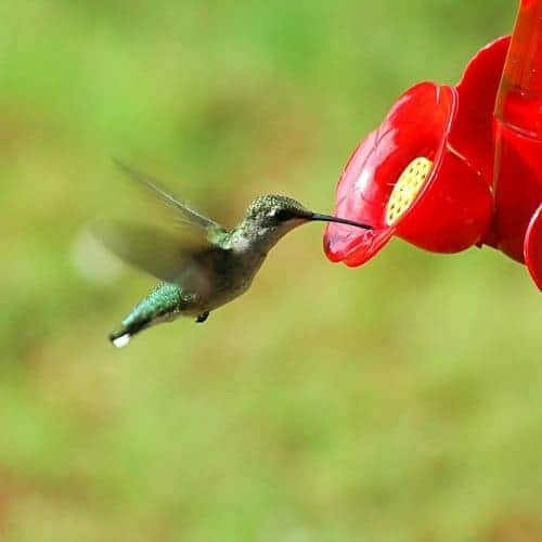 How Do You Keep Bees Away From Hummingbird Feeders