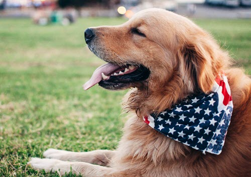 Pets Helping Vets