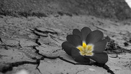 Date la oportunidad de ser un resiliente