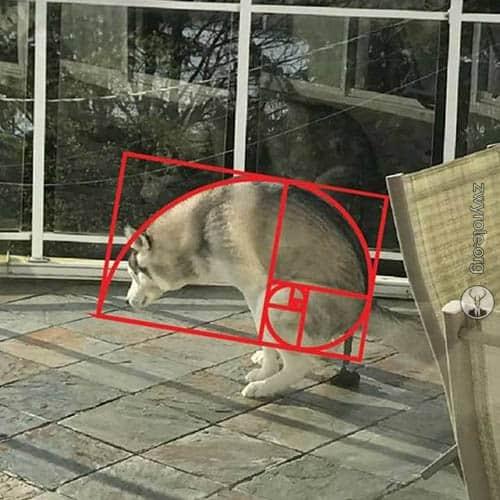 Photo of Jak wyliczać duże (naprawdę duże) liczby Fibonacciego?