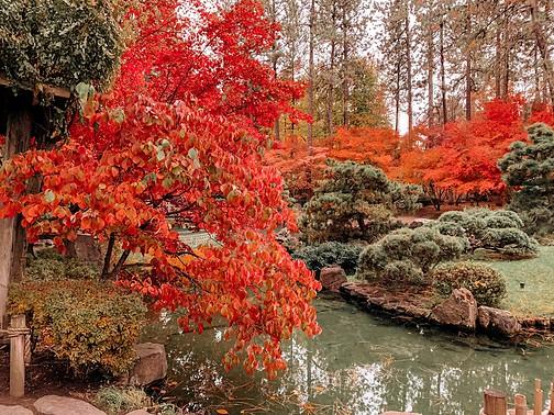 enjoy fall in spokane with spokane fall colors