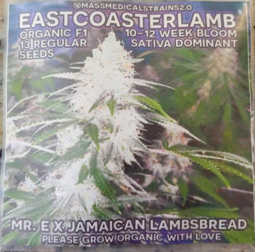 MASS_MEDICAL_STRAINS_EASTCOASTERLAMB_REG_LUSCIOUS_GENETICS