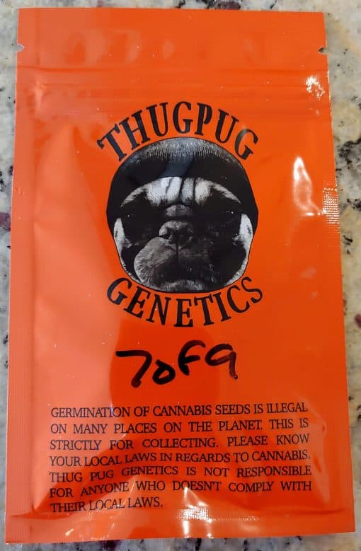 THUGPUG_GENETICS_7_OF_9_LUSCIOUS_GENETICS