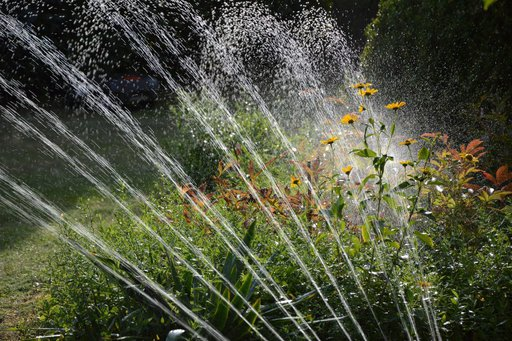 The DOs and Dont's of Watering