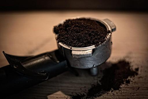 growing microgreens in coffee grounds