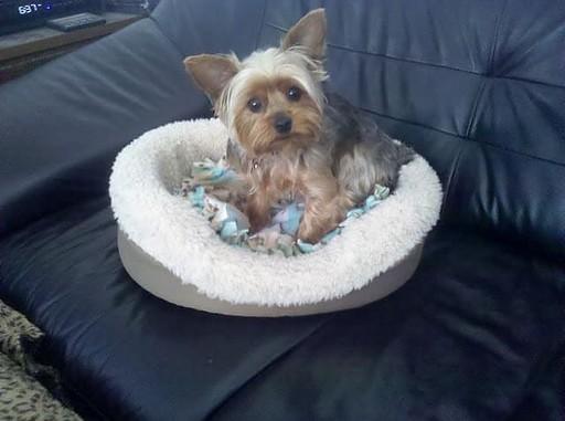 Yuki Dog Bed