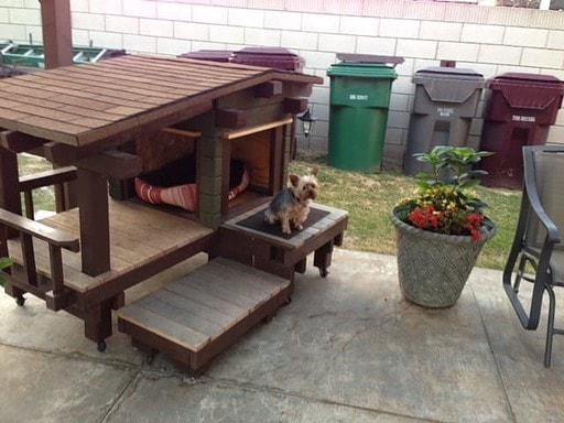Yuki working on her sit stay