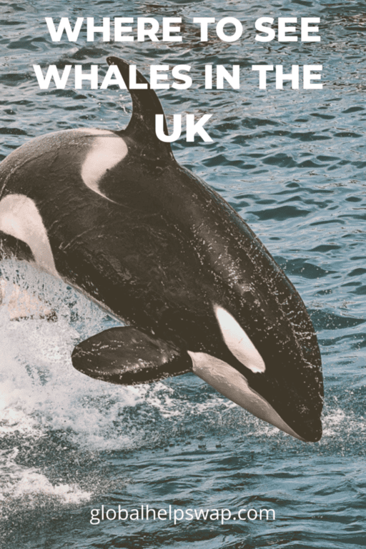 Where to see whales and dolphins in the UK.