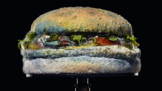 Moldy Burger King Whopper