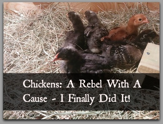 rebel chicks