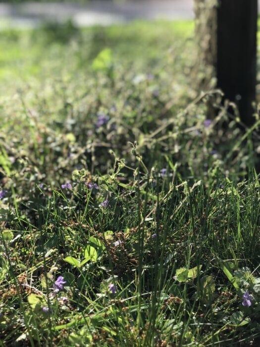 wildflowers in morning sun